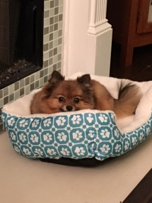 Daisy loves her bed