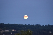 Vineyard Moon in Newburg, OR!